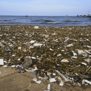 Plastic Wave - Hon Son Island - TONTOTON